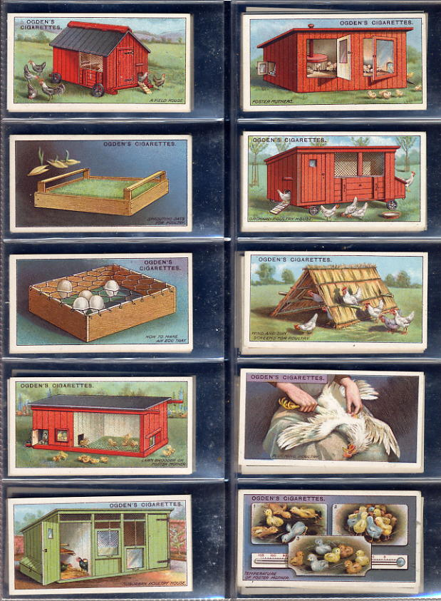 Ogdens - Poultry Rearing 1st & 2nd Series 1922